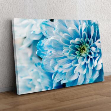 Blaue Chrysantheme