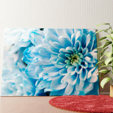 Personalisiertes Wandbild Blaue Chrysantheme