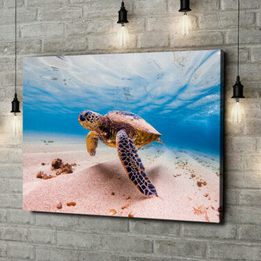 Leinwandbild personalisiert Schildkröte im Meer
