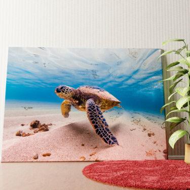 Personalisiertes Wandbild Schildkröte im Meer
